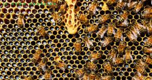 Benefits-of-Honey-1