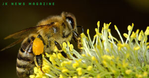 Benefits-of-Honey-2